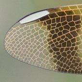 Kunraticky rybnik, u Cvikova, severni Cechy
