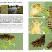 fotogids larven 01