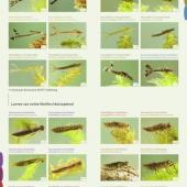 fotogids larven 03